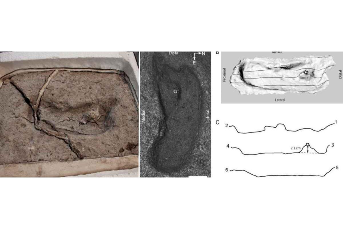 In Cile scoperta la più vecchia impronta di un piede umano delle Americhe