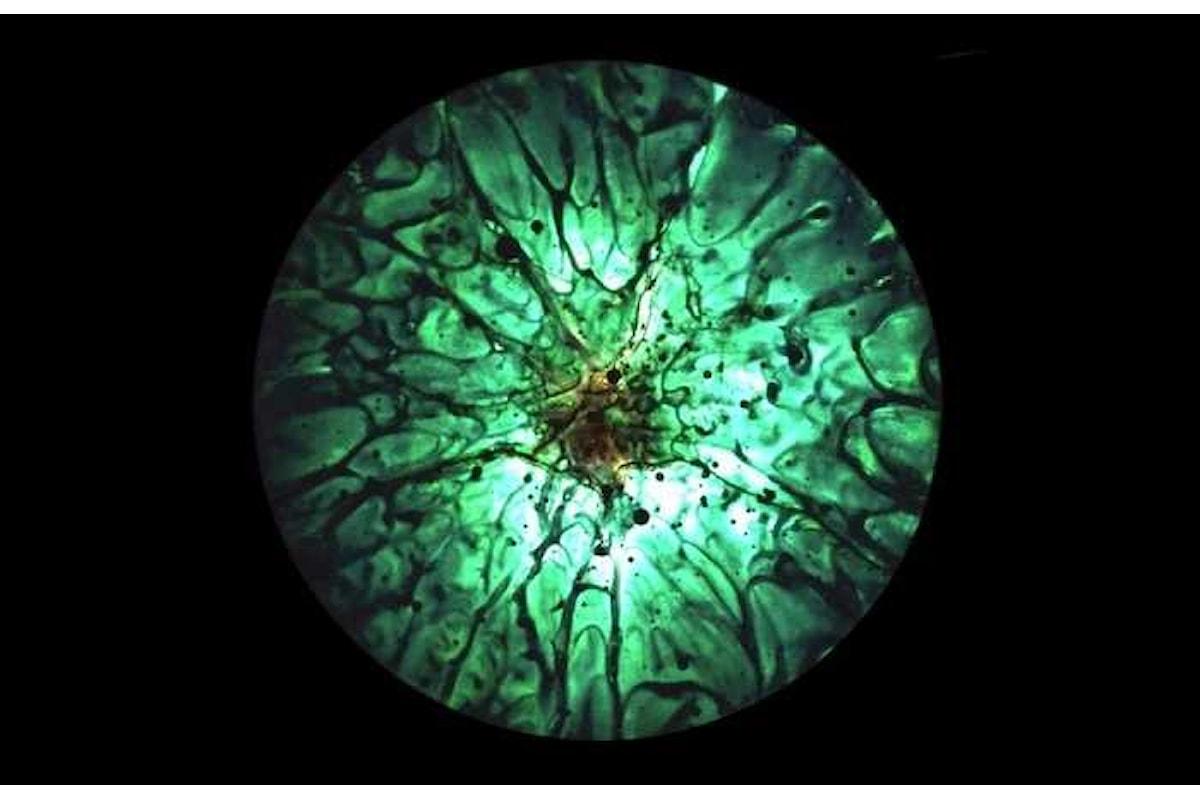 Arte e scienza: mostra di Enrico Magnani al CERN di Ginevra