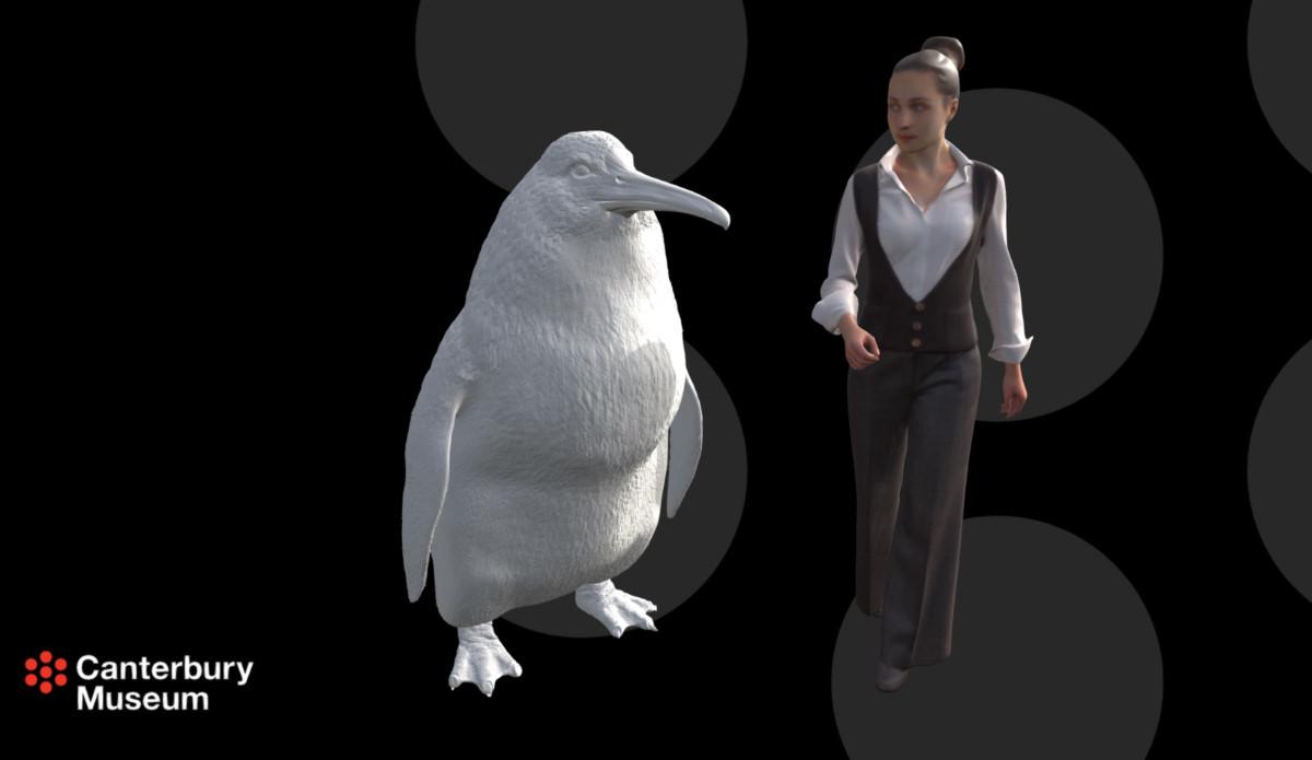 In nuova Zelanda i pinguini avevano le dimensioni di un uomo