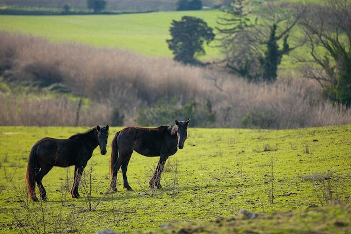 Tuscia Experience: escursioni a cavallo in Tuscia, un viaggio a ritmo lento nel cuore del territorio e della sua storia