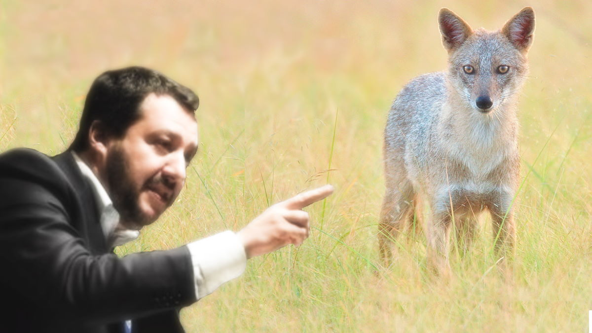 Per Salvini sono uno sciacallo: incasso e ringrazio