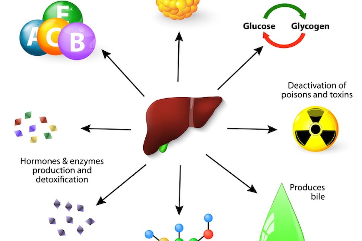 Piante medicinali per un fegato in buona salute