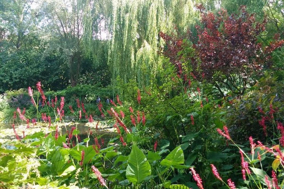 Viaggio nel giardino di Claude Monet