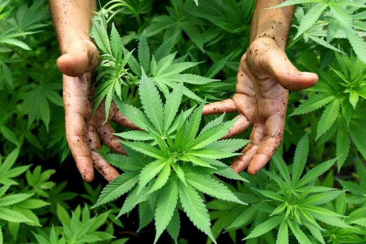 La legge sulla liberalizzazione della Cannabis? Emendata già nella discussione in Commissione