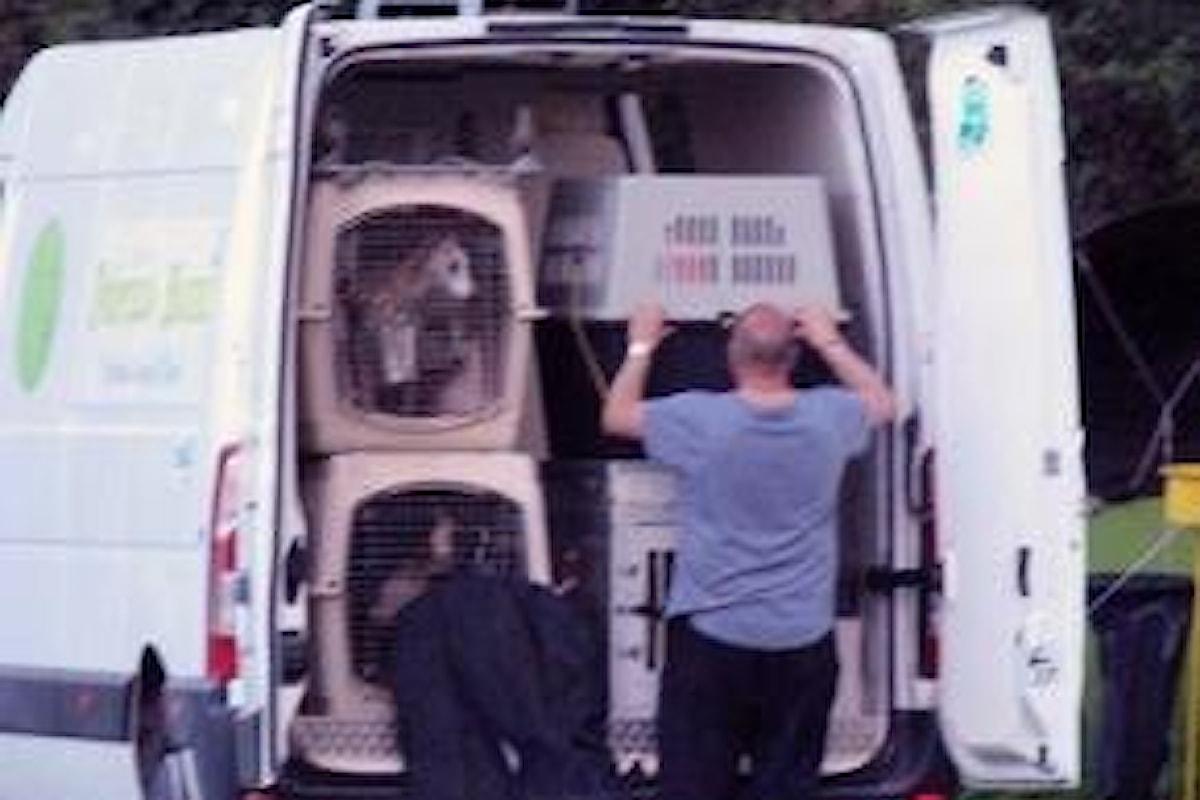 Strage di cani all'Expo Canina di Rende: ecco come sono andate realmente le cose