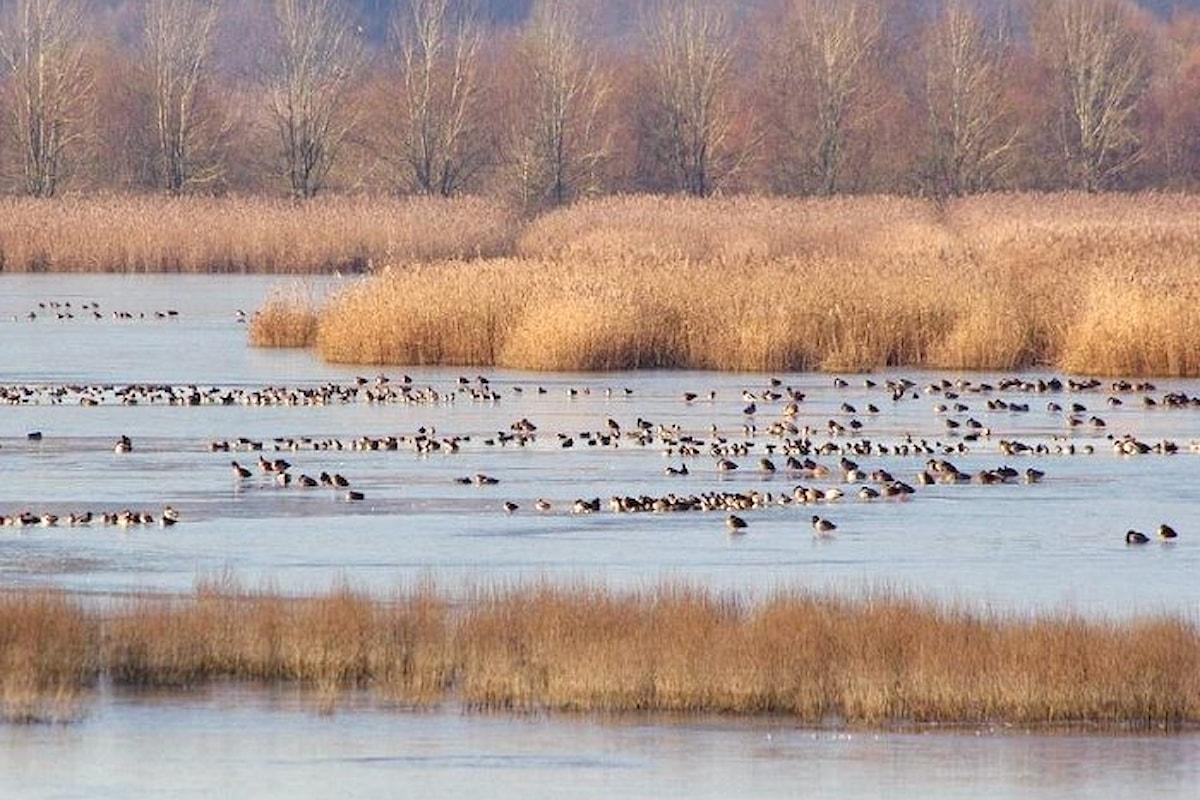 WWF, si è concluso il primo campo antibracconaggio nell'area di Fucecchio