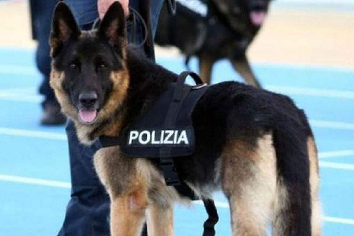 Adotta un cane... poliziotto