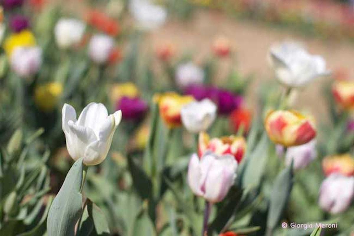 Cose da fare a Pasqua e Pasquetta 2017: le mostre da vedere nel mendrisiotto