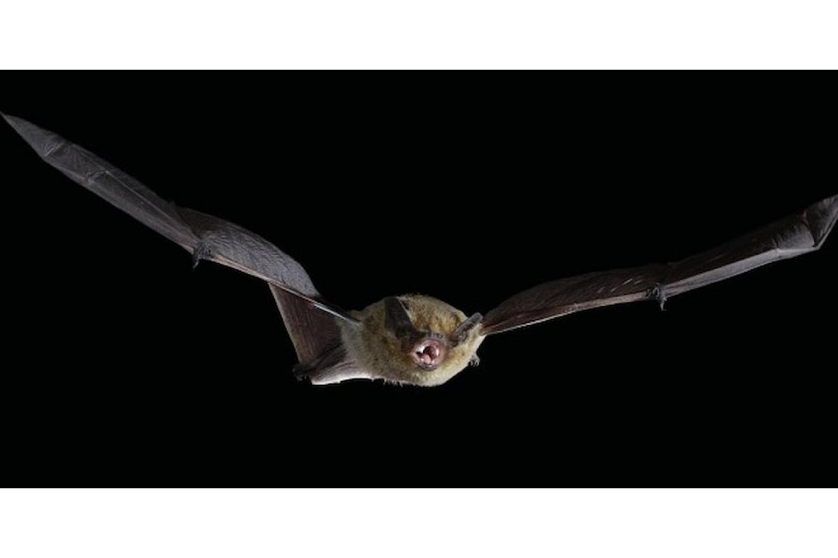 Evoluzione: Le ali dei pipistrelli