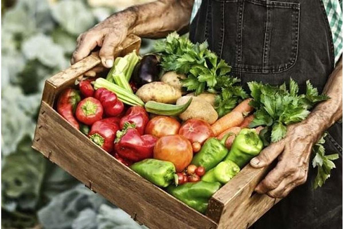 I Mercati della Terra di Slow Food si incontrano a Montevarchi dal 24 al 26 novembre