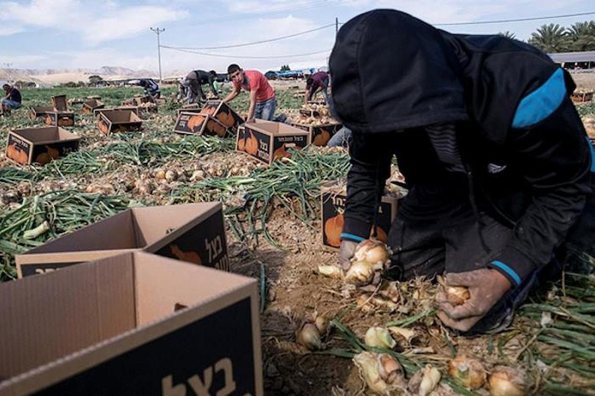 Il Senato irlandese vieta l'importazione dei prodotti dalle colonie israeliane presenti nei territori occupati