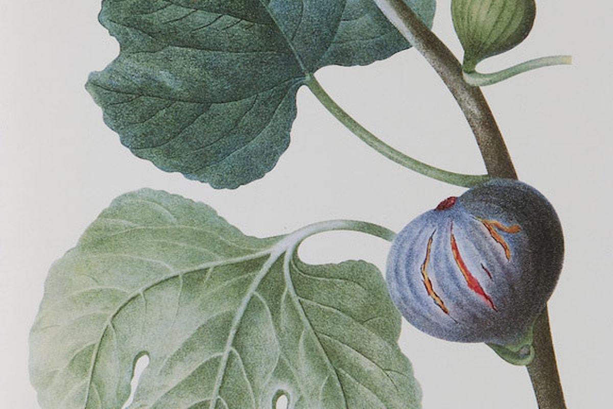 Ficus carica per il benessere di stomaco ed intestino
