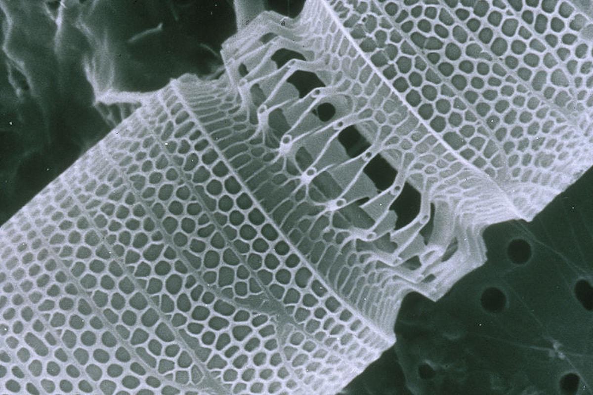 Creata una rivoluzionaria nanomacchina a Bonn