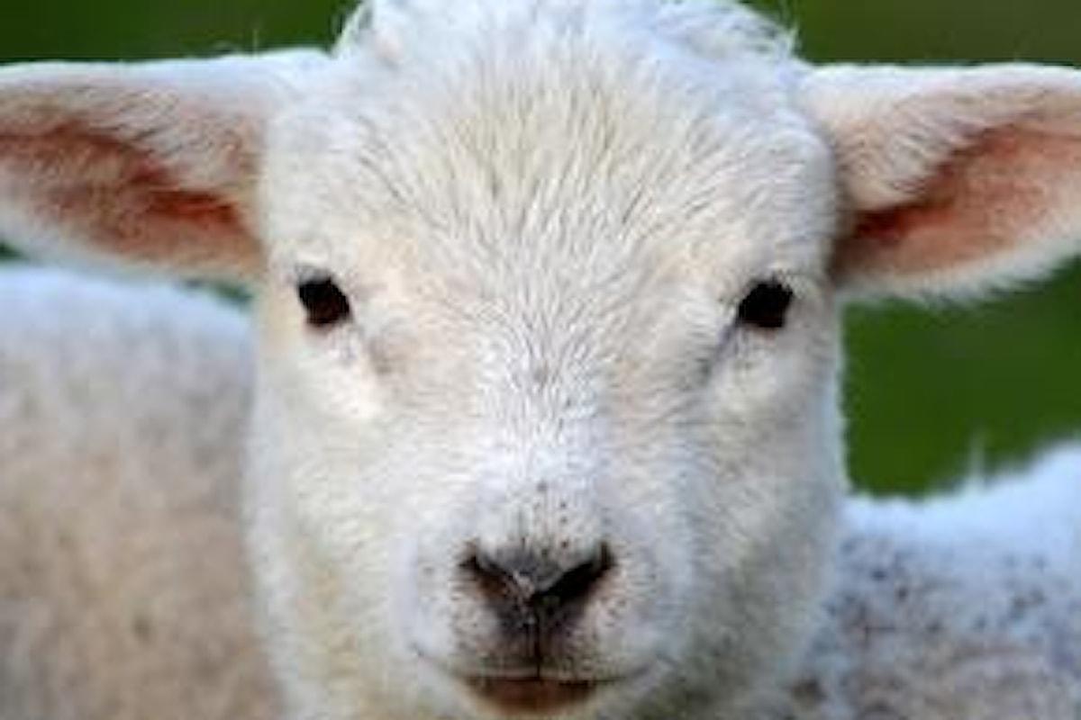 La Lega contro la macellazione Halal: animalismo a targhe alterne?