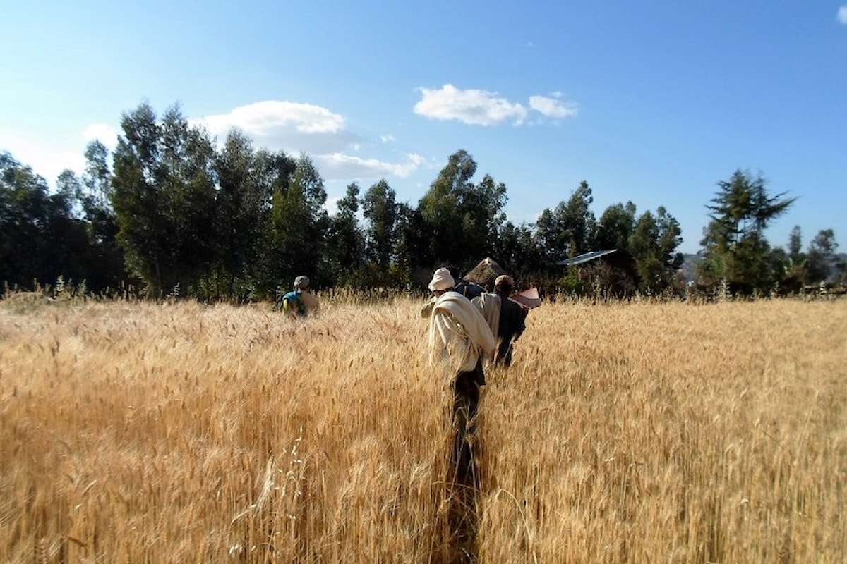 Agrifex 2016: in Etiopia le aziende italiane dell'agrifood presentano i propri prodotti