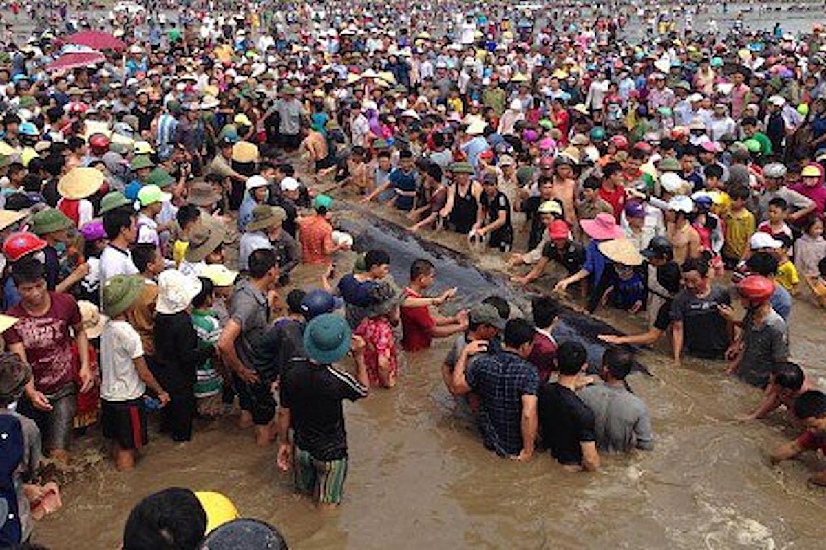 La solidarietà del popolo vietnamita salva una balena