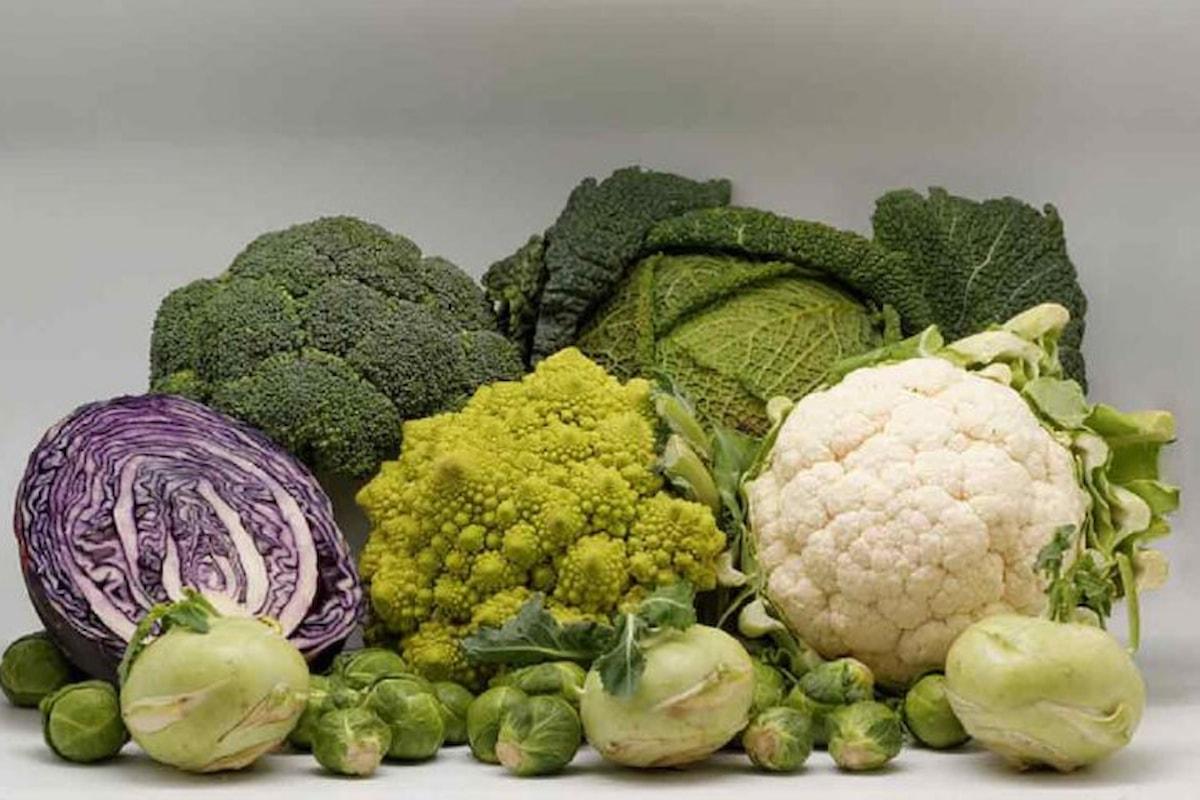 I broccoli, i cavoli e le Brassicaceae in generale: gli amici salutari dell'alimentazione invernale