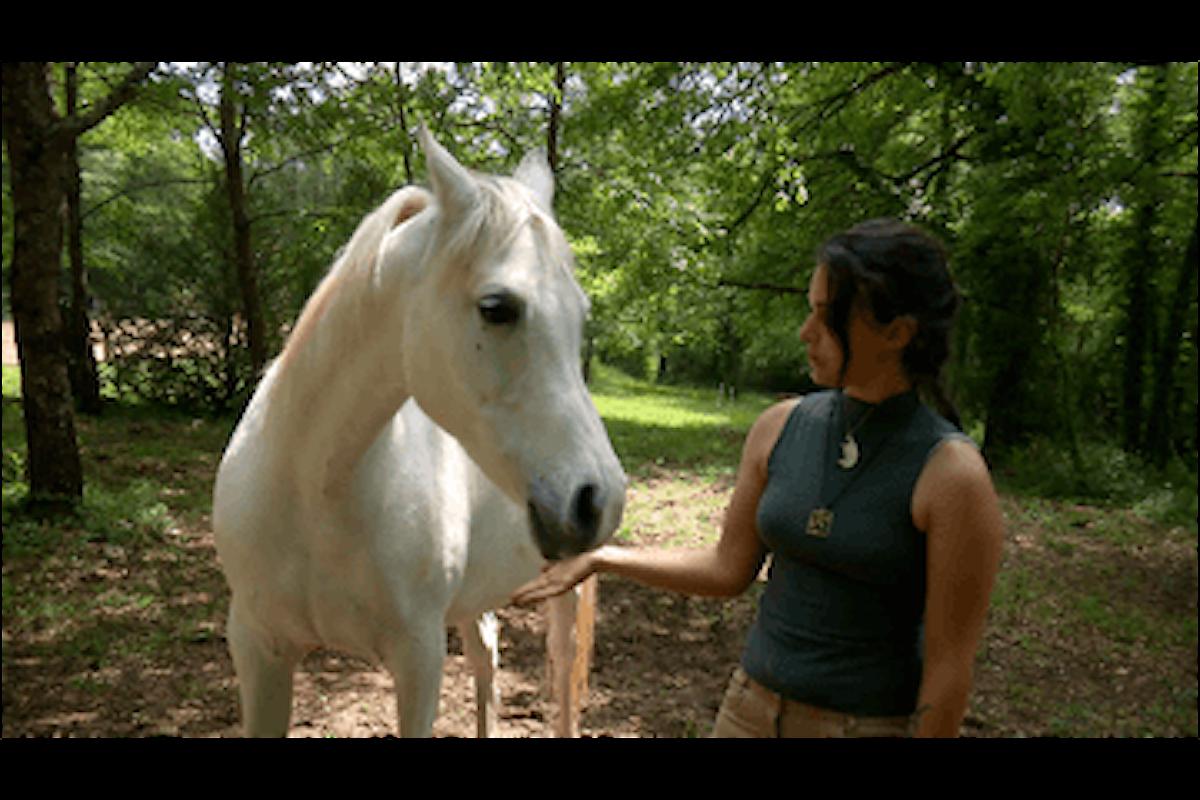 Juanita, la cavalla allergica al fieno è stata salvata